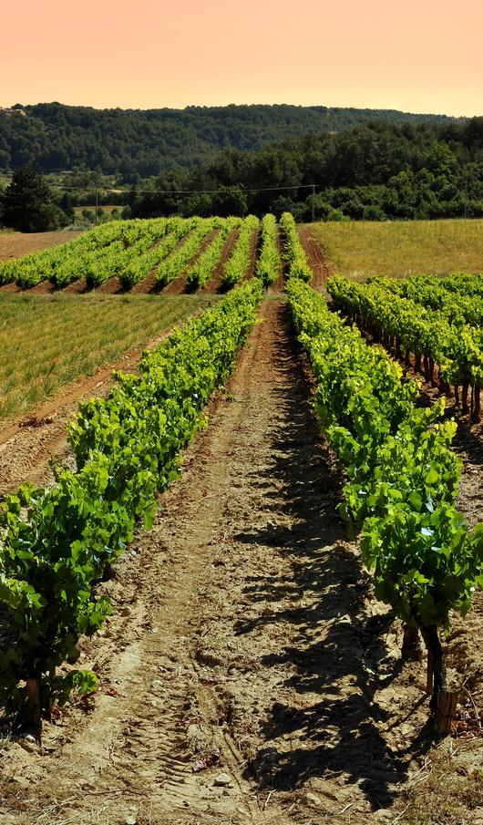 mistral tour - circuit touristique wine tour luberon