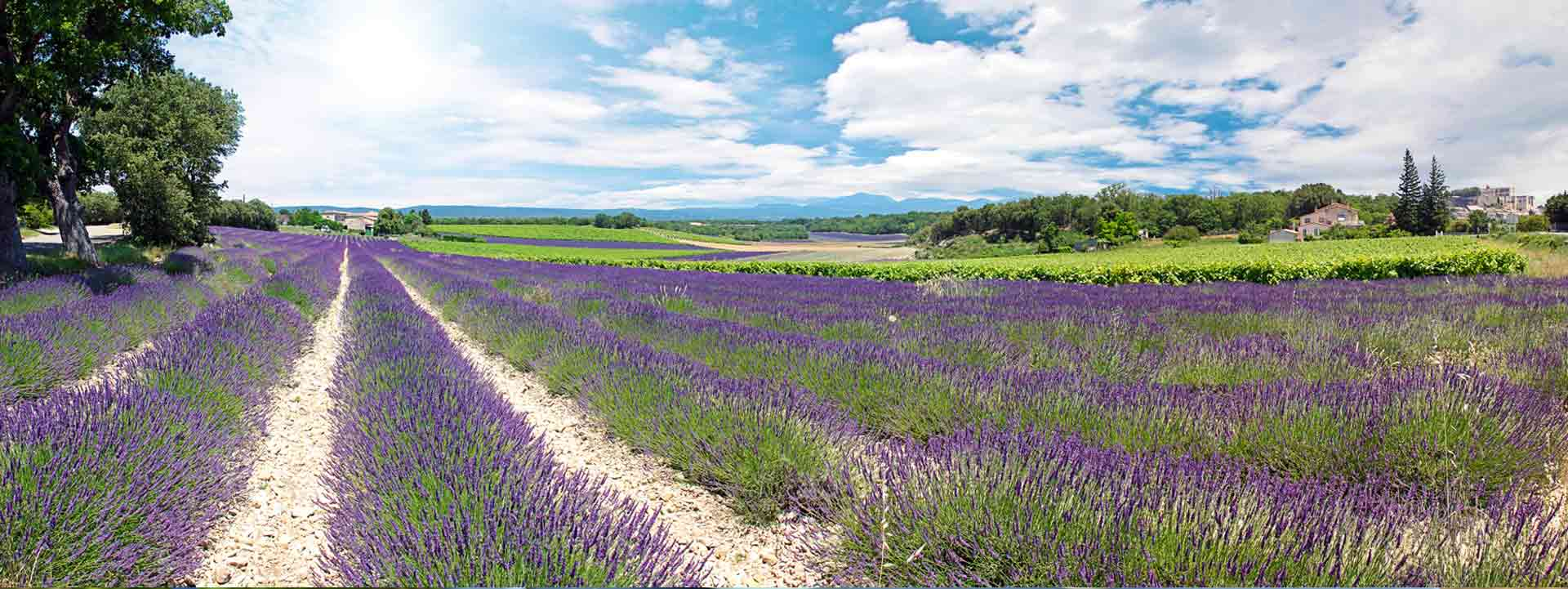 Wine tours in Provence by Mistral Tour, tourist agency in Avignon, who plans and delivers bespoke and personalised wine tours in Provence and the Rhône Valley.