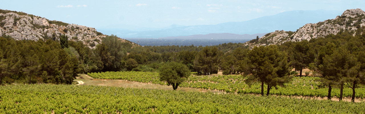 mistral tour wine tours provence avignon vallée du rhône alpilles